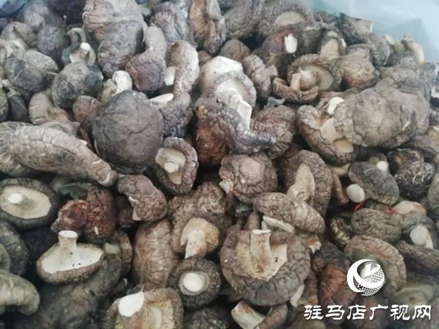 贫困户李俊堂 :大病救治有依靠 种植香菇奔富路