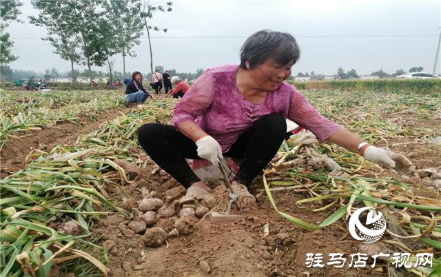 """""""北沃小肥料""""成就""""全国大农业"""" ——骨粉高钙肥系列专题报道"""