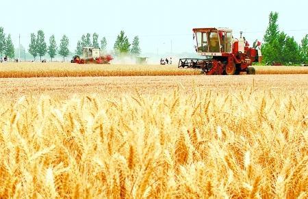 本周天气晴好 小麦收割要趁早