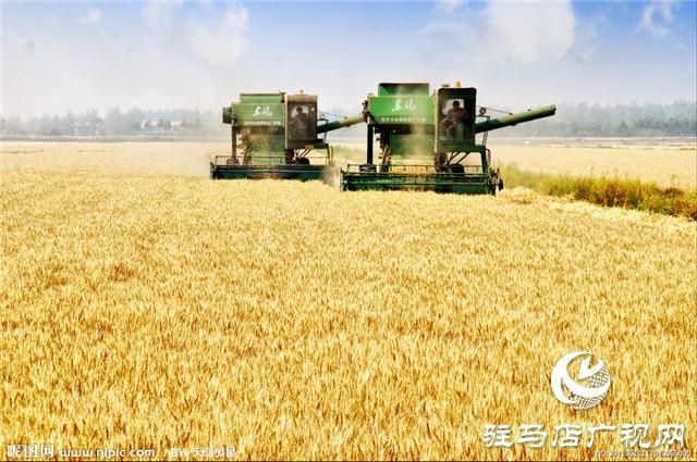 吨源种业彩色小麦喜获丰收