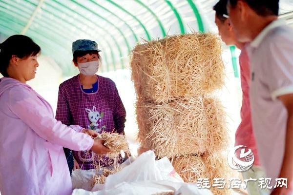泌阳养殖户陈宏伟:就想让乡亲们有钱赚 有事做