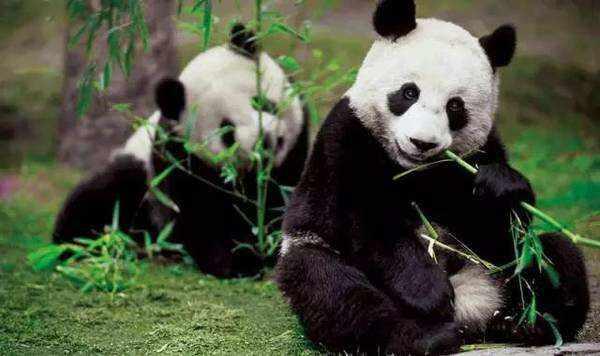 全国首个大熊猫国家公园法庭成立