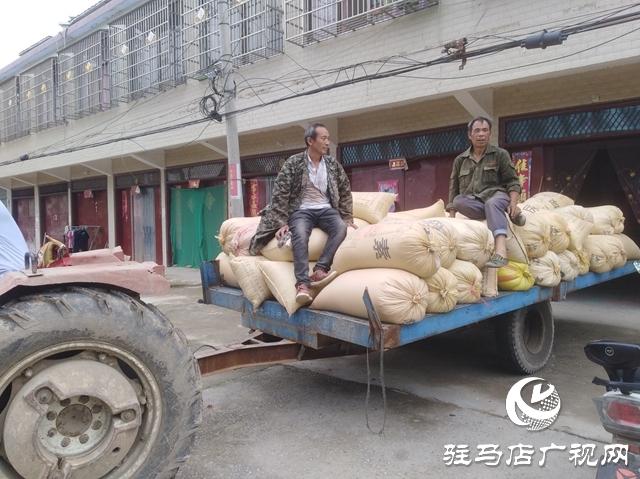 """正阳县:农民卖粮""""足不出户"""""""
