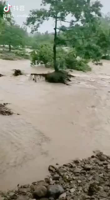 连续降雨致泌阳县下碑寺乡下陈村西大桥被洪水冲垮