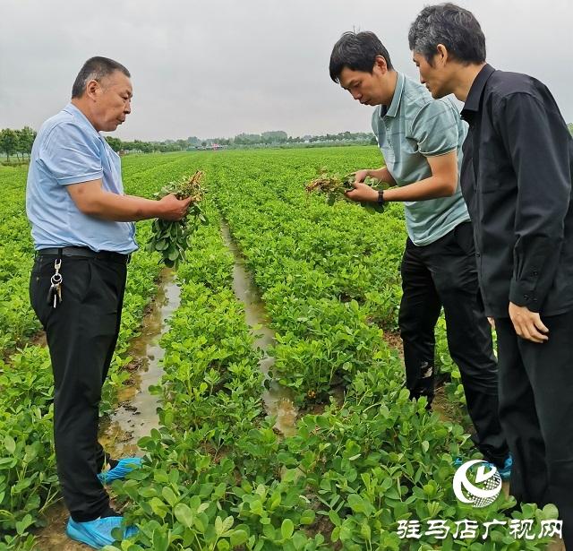 """正阳:省市县三级气象专家为花生花针期管理""""把脉问诊"""""""
