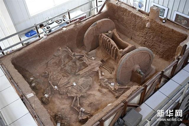 陕西保护复原2800年前西周青铜轮牙马车 图