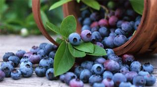 女性多吃蓝莓长肌肉