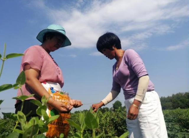 西平县五沟营镇:金银花种植助推脱贫攻坚