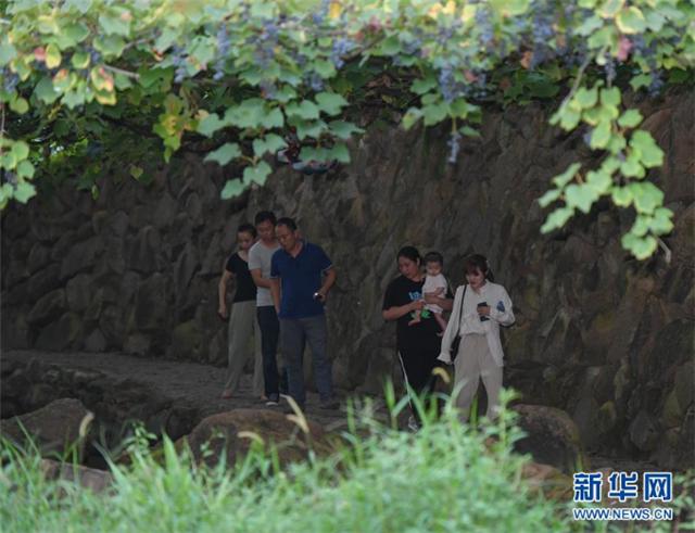 福建福安:葡萄熟了 游客来了 畲乡富了