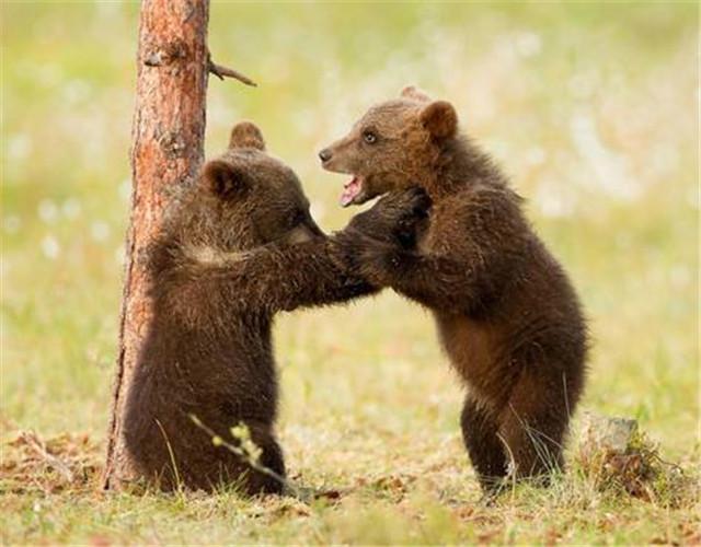 与熊为邻,守护山林——走近长白山自然保护区巡护员