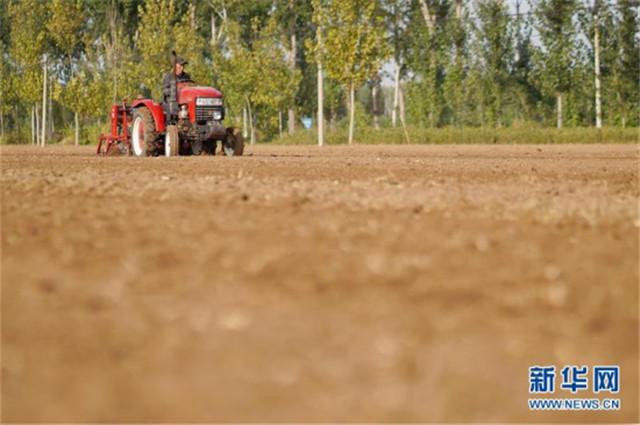 河北:金秋小麦播种忙
