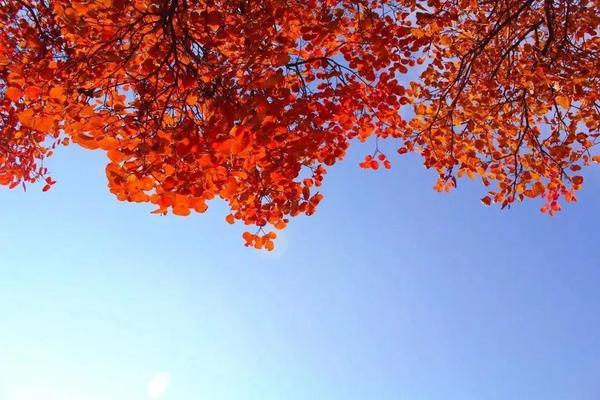 又是一年红叶季,期待在这里遇见最美的你