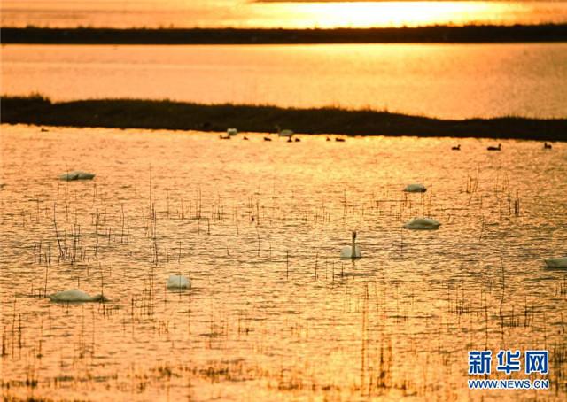 """江苏南京:""""天空之镜""""变身""""天鹅湖"""""""