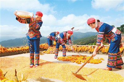 云南双柏:科技助农民增收