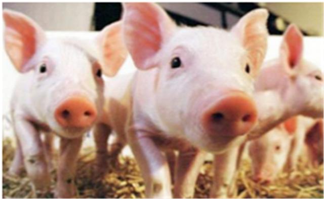 集贸市场生猪价格下降