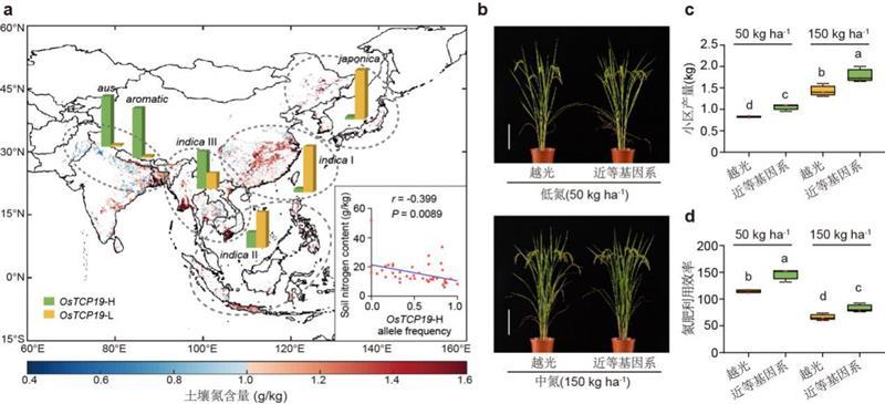 """中国科学家找回""""古早""""水稻基因,可提高氮肥利用效率"""
