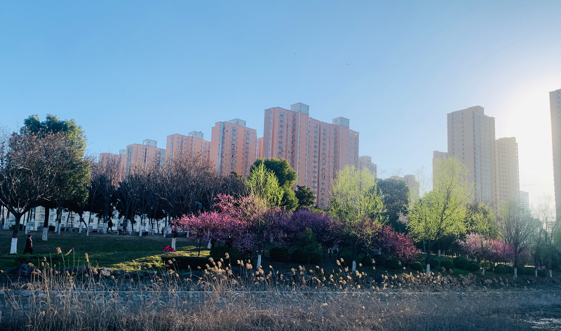 王艳凌 许文慧拍摄于开源公园