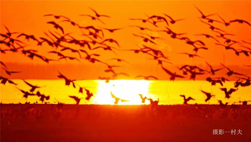 【今日驻马店】中原最美湿地——宿鸭湖黄昏