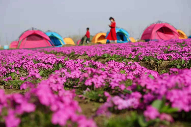 花团锦簇 王向阳 摄