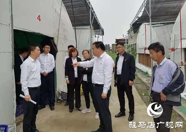 确山县双河镇:观摩交流谋发展 特色产业促振兴