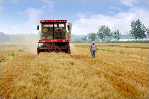大规模机收基本结束 河南已收获小麦8458万亩