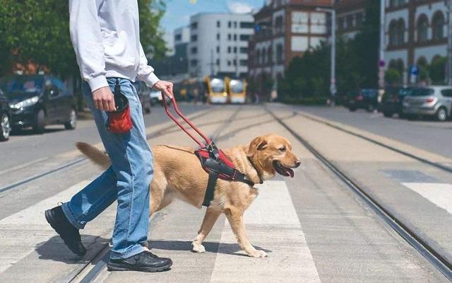 不得拒绝导盲犬乘坐公共交通工具
