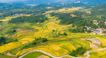"""农业农村部等6部门联合印发《""""十四五""""全国农业绿色发展规划》"""