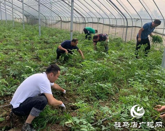 确山县双河镇:发挥干部作用 助力乡村振兴