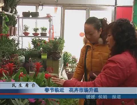 春节临近 花卉市场升温