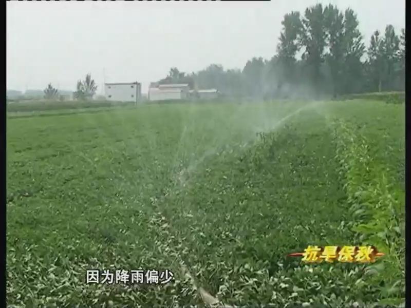 全力以赴浇水抗旱 确保秋粮丰产丰收