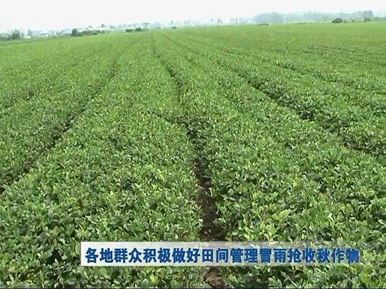 各地群众积极做好田间管理冒雨抢收农作物