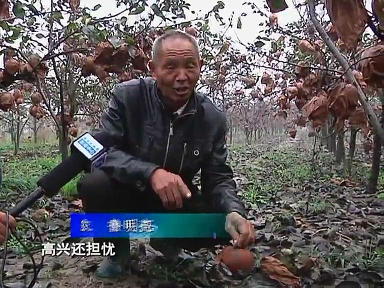 网友爱心接力 帮助正阳残疾果农卖梨