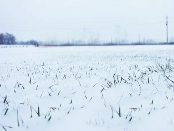 大雪过后农民忙追肥 专家称现在施肥不科学