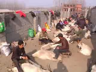 羊倌村的贩羊经