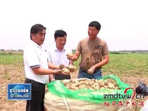 订单土豆喜获丰收