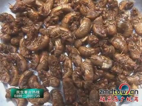 泌阳:小金蝉带了大效益