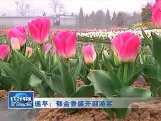 遂平:郁金香盛开迎游客